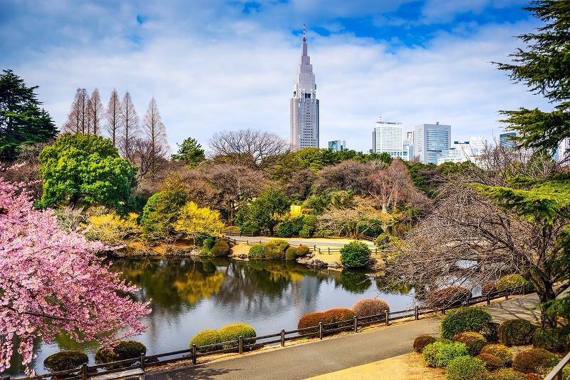 Shinjuku Gyoen Tempat Terbaik Melihat Bunga Sakura image