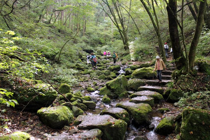 Hits dan Harus Dicoba! 5 Pendakian Wisata Alam di Tokyo image