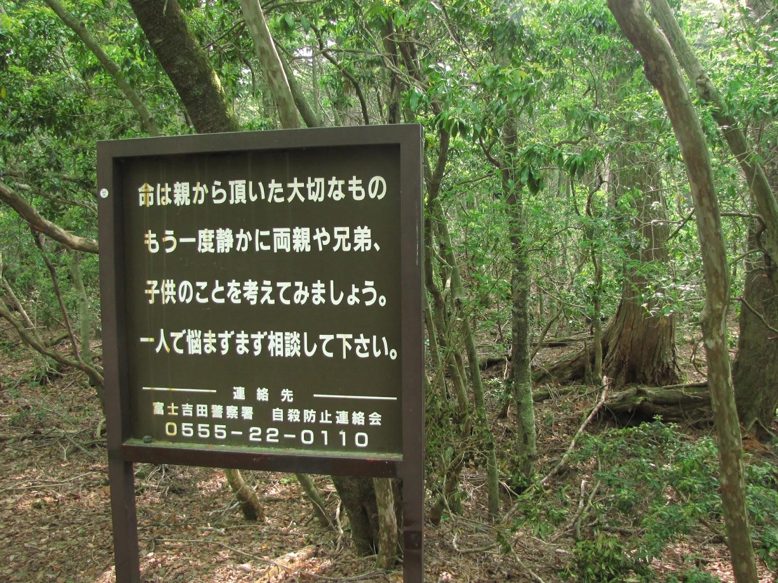 Berkunjung ke Hutan Aokigahara, Sensasi Seram yang Tak Terbayangkan image
