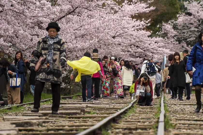 Prakiraan Jadwal Sakura Jepang 2019 dan Spot-spot Terbaiknya image