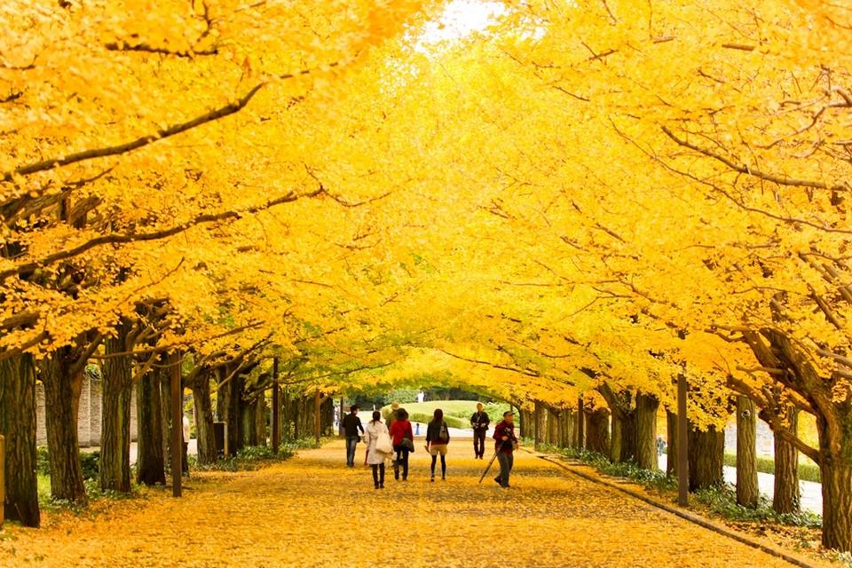 5 Hal Tentang Musim Gugur di Jepang image