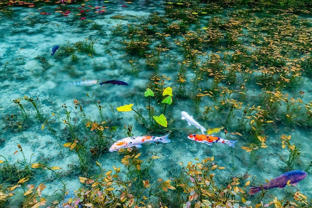 Unik! Kolam Ini Dijuluki Monet's Pond karena Pemandangannya yang Mirip Lukisan Cantik image