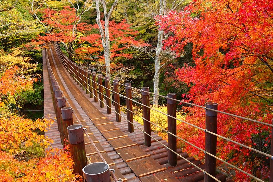 Ke Ibaraki Saat Musim Gugur? Cek Tempat-tempat Ini! image