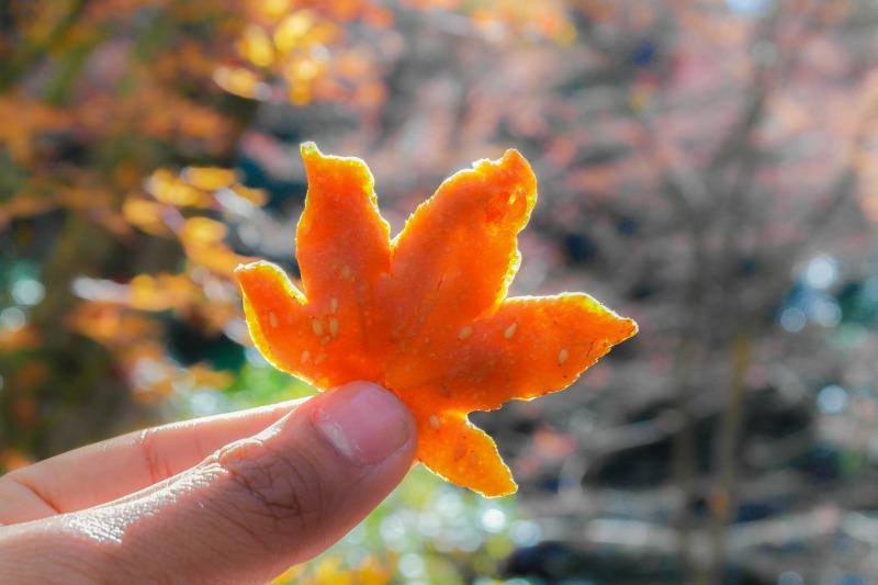 Momiji Tempura: Mencicipi Daun Maple Musim Gugur yang Digoreng dengan Tepung image