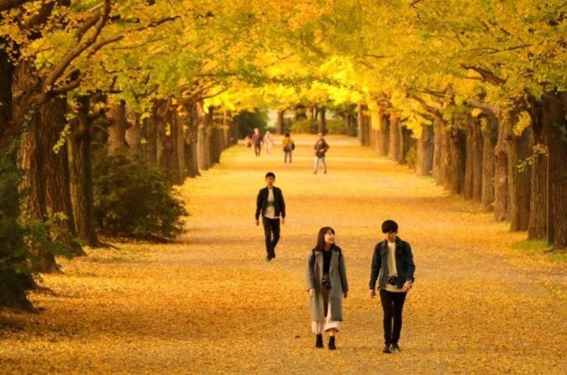 Kegiatan yang Bisa Kamu Lakukan Saat Liburan Musim Gugur di Jepang image