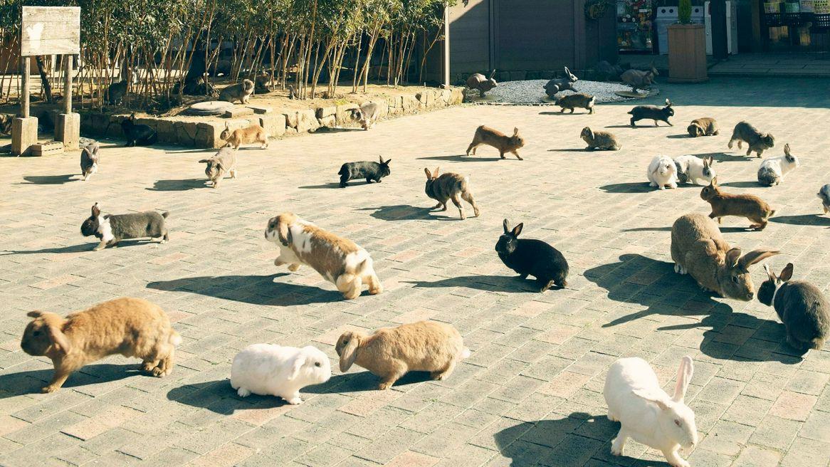 Bermain Bersama Kelinci yang Imut-imut di Tsukiusagi no Sato image
