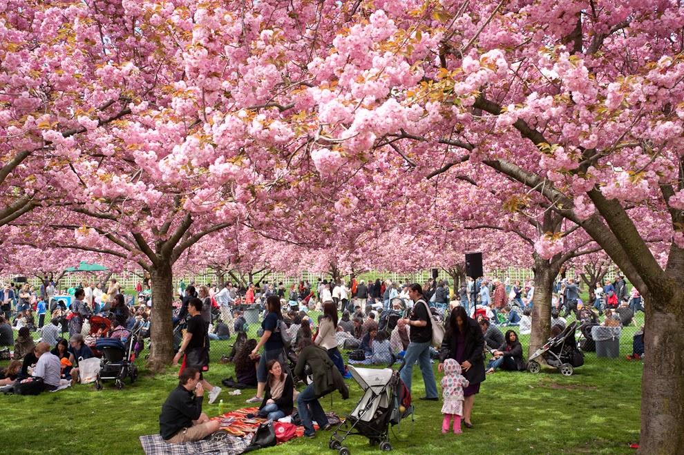 Makanan Khas pada Musim Semi di Negeri Sakura image