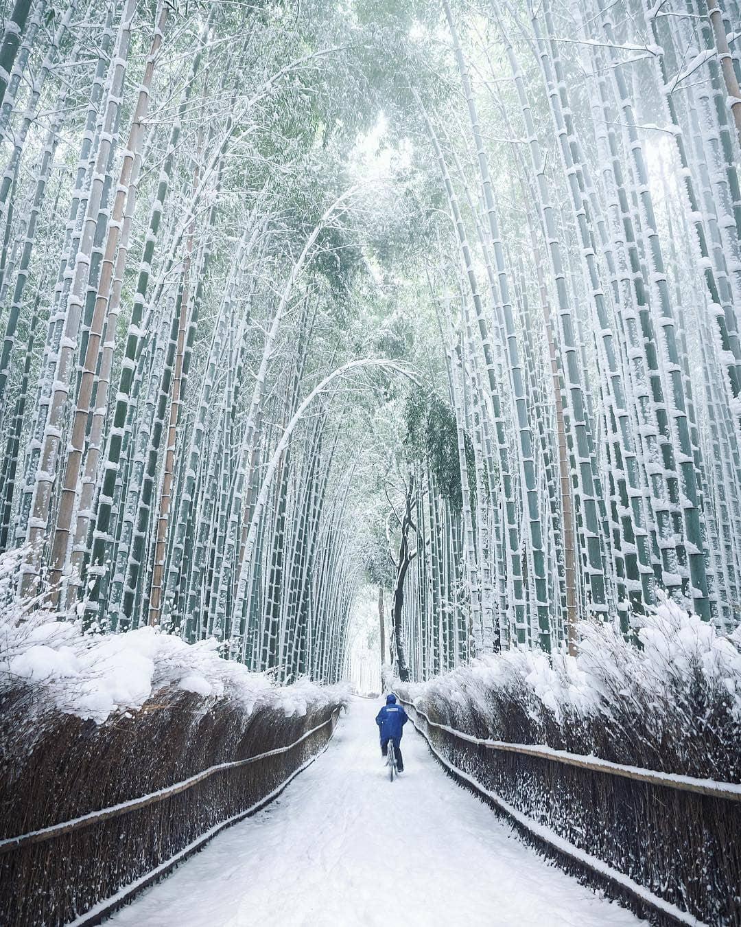 Hutan Bambu Sagano Arashiyama