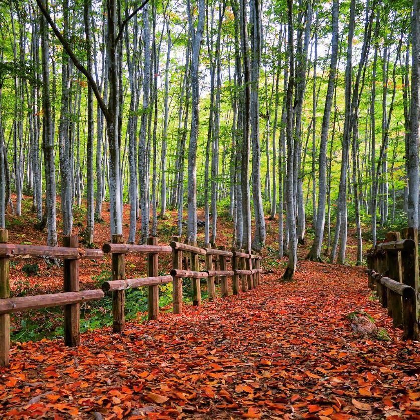 Bijinbayashi, Tempat Wisata di Jepang Yang Jarang Diketahui