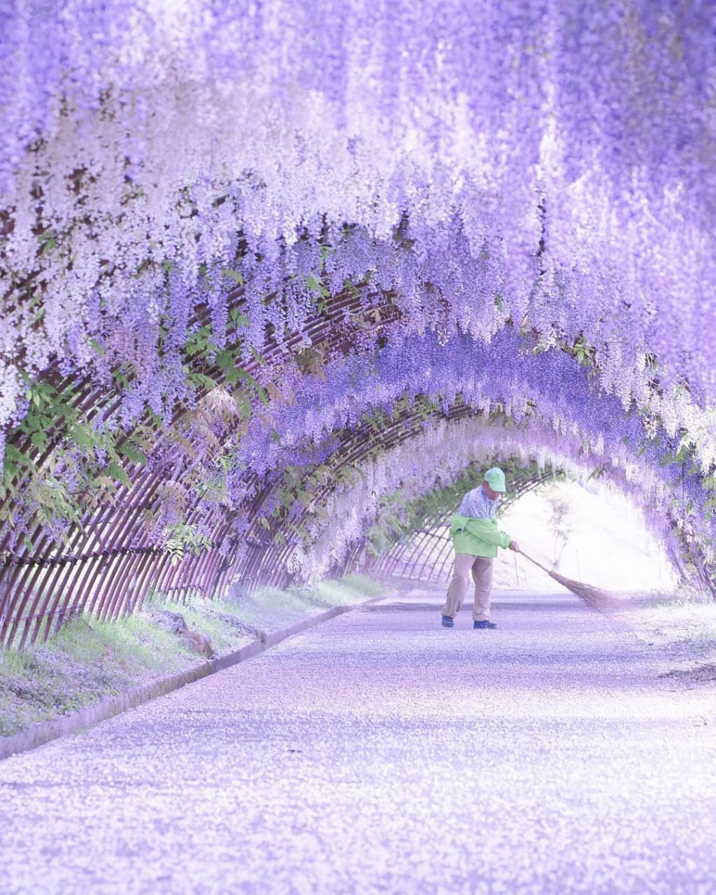 Bunga Musim Semi di Jepang