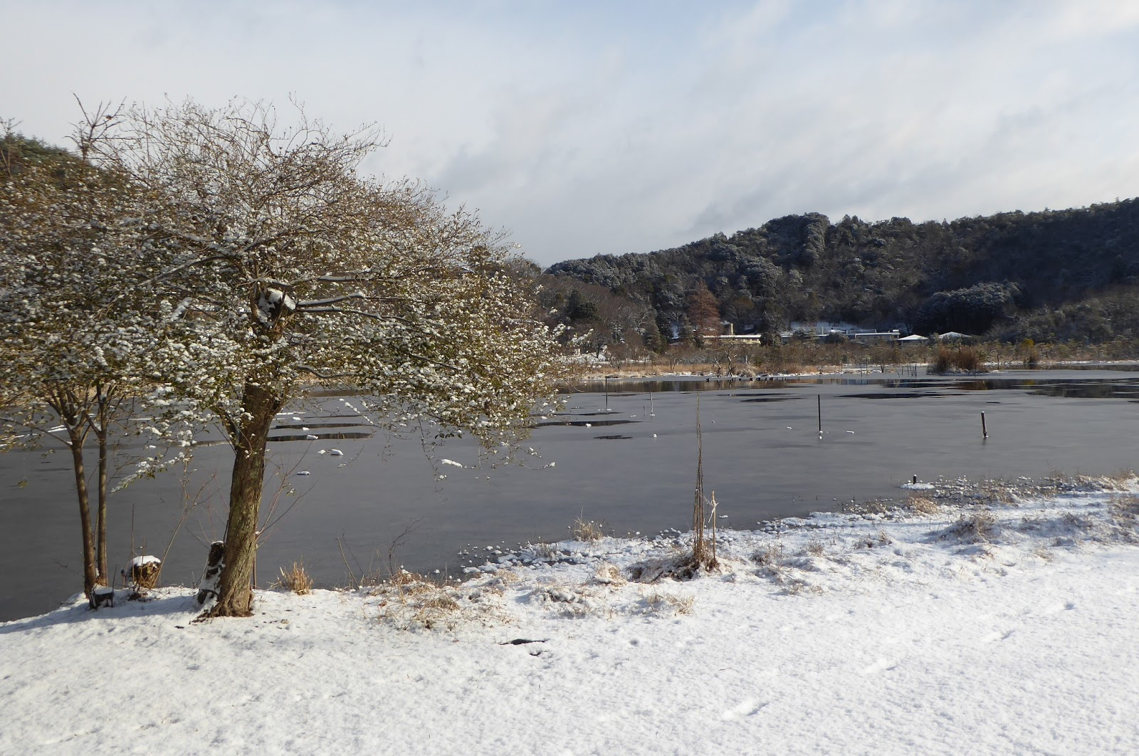 Hiiiii, Danau Midorogaike Daerah Paling Angker di Kyoto