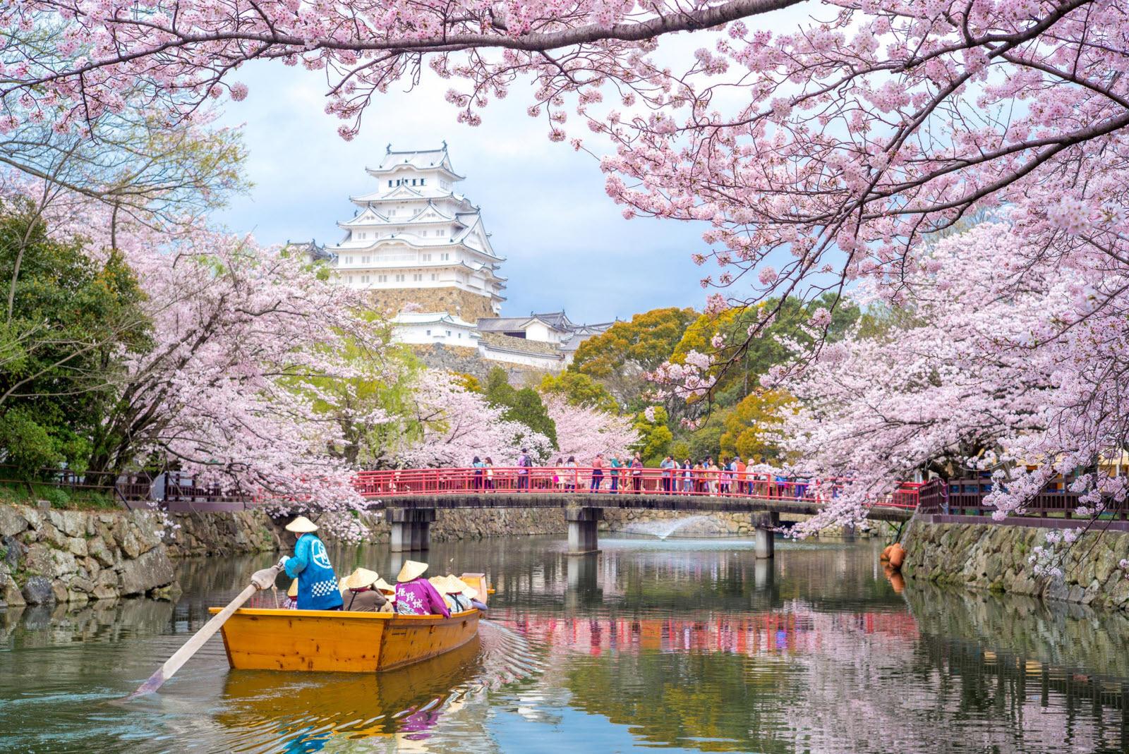 Kastil Himeji dan bunga sakura