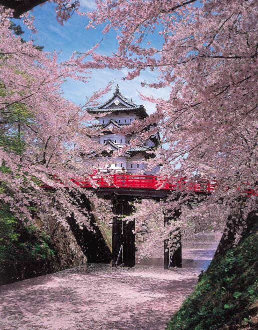 Kastil Hirosaki dan bunga sakura