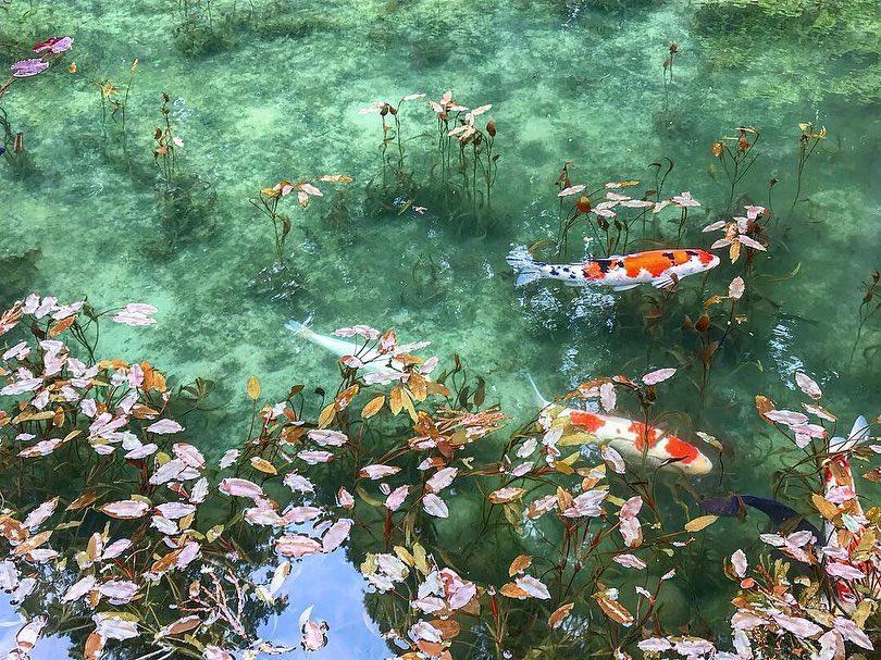 Kolam Monet