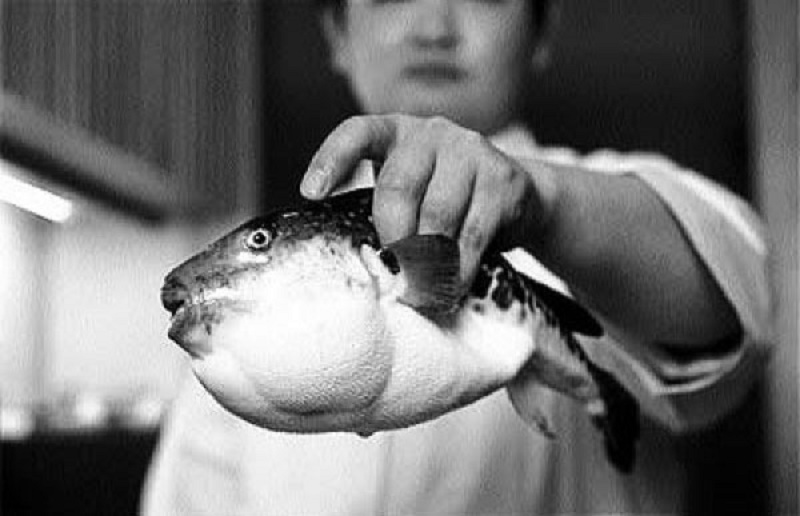 Makanan Penantang Maut Dari Jepang