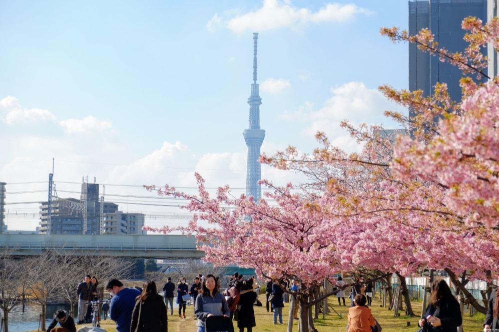 Sakura Februari Tokyo