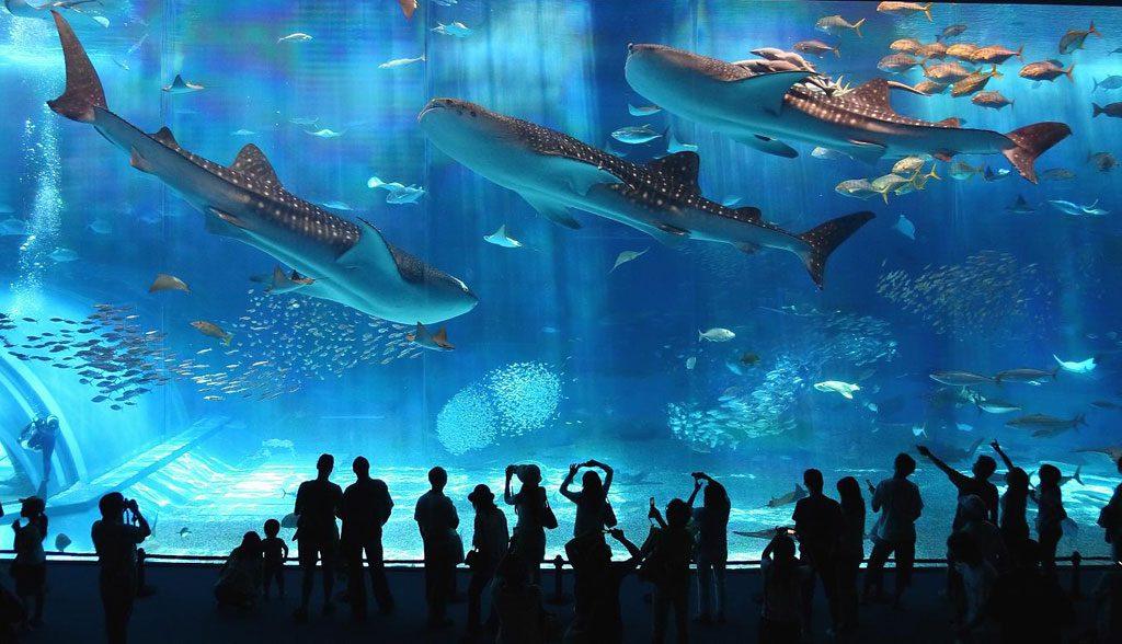 Wuiiiihh 3 Akuarium Terbesar Di Jepang
