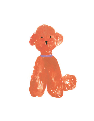 Red Poodle Card image
