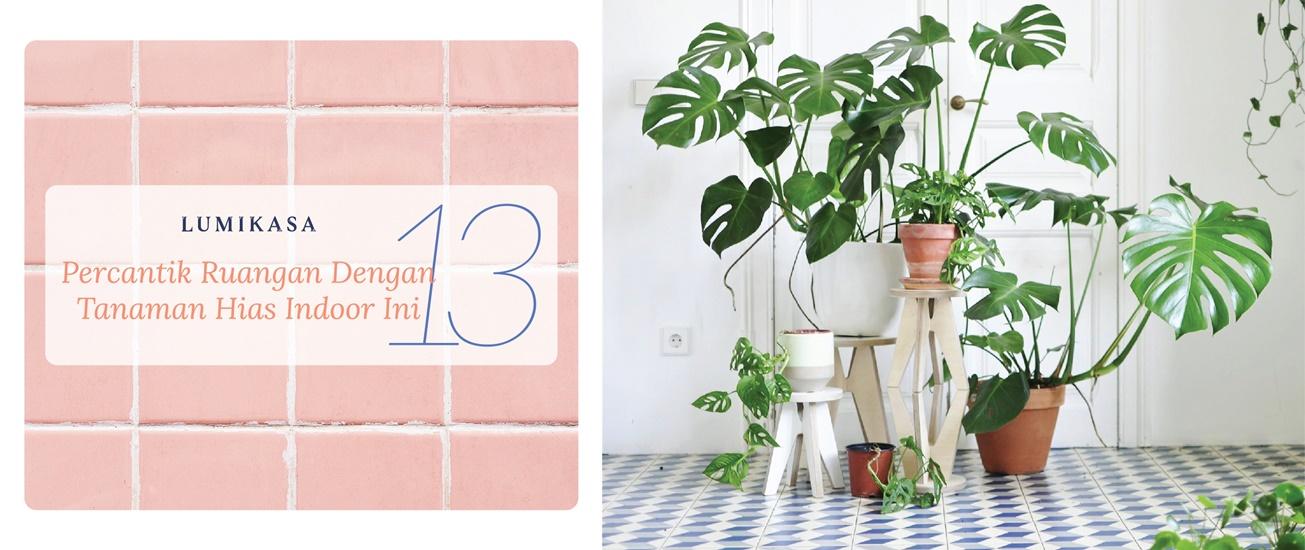 Percantik Ruangan Dengan 13 Tanaman Hias Indoor Ini