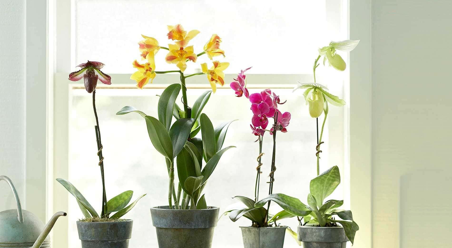 Sansevieria Plant Feng Shui percantik ruangan dengan 13 tanaman hias indoor ini