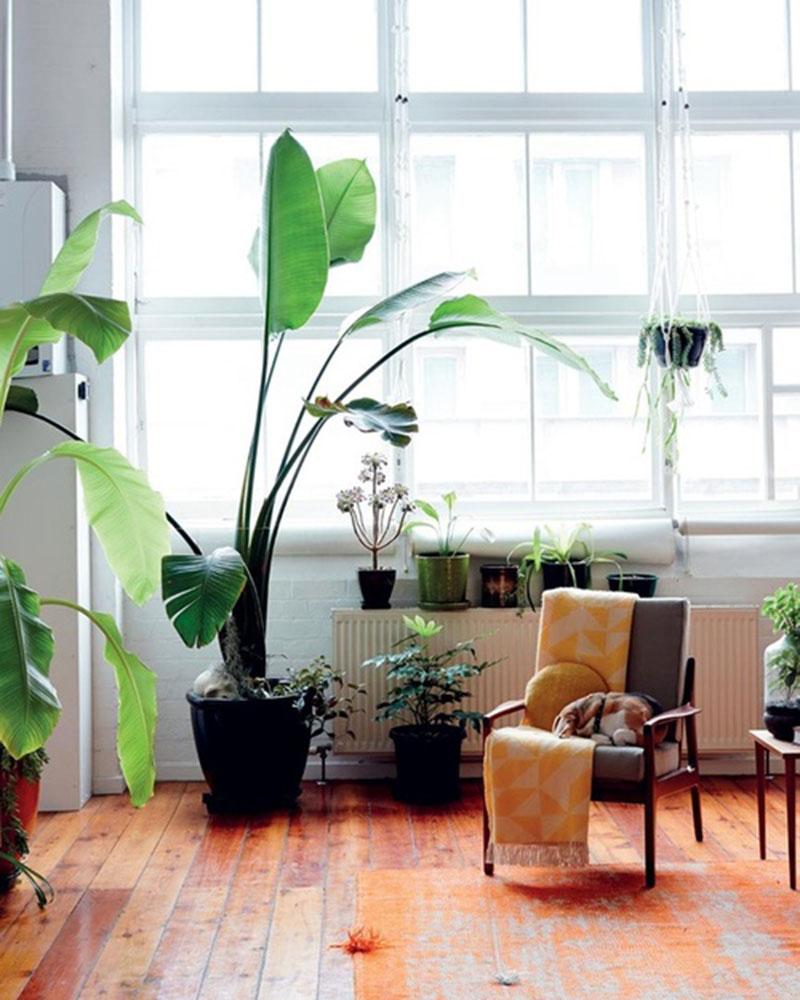 tall plant 9 plants for the office inhabitat u2013 green design innovation green building interior tropical plant design