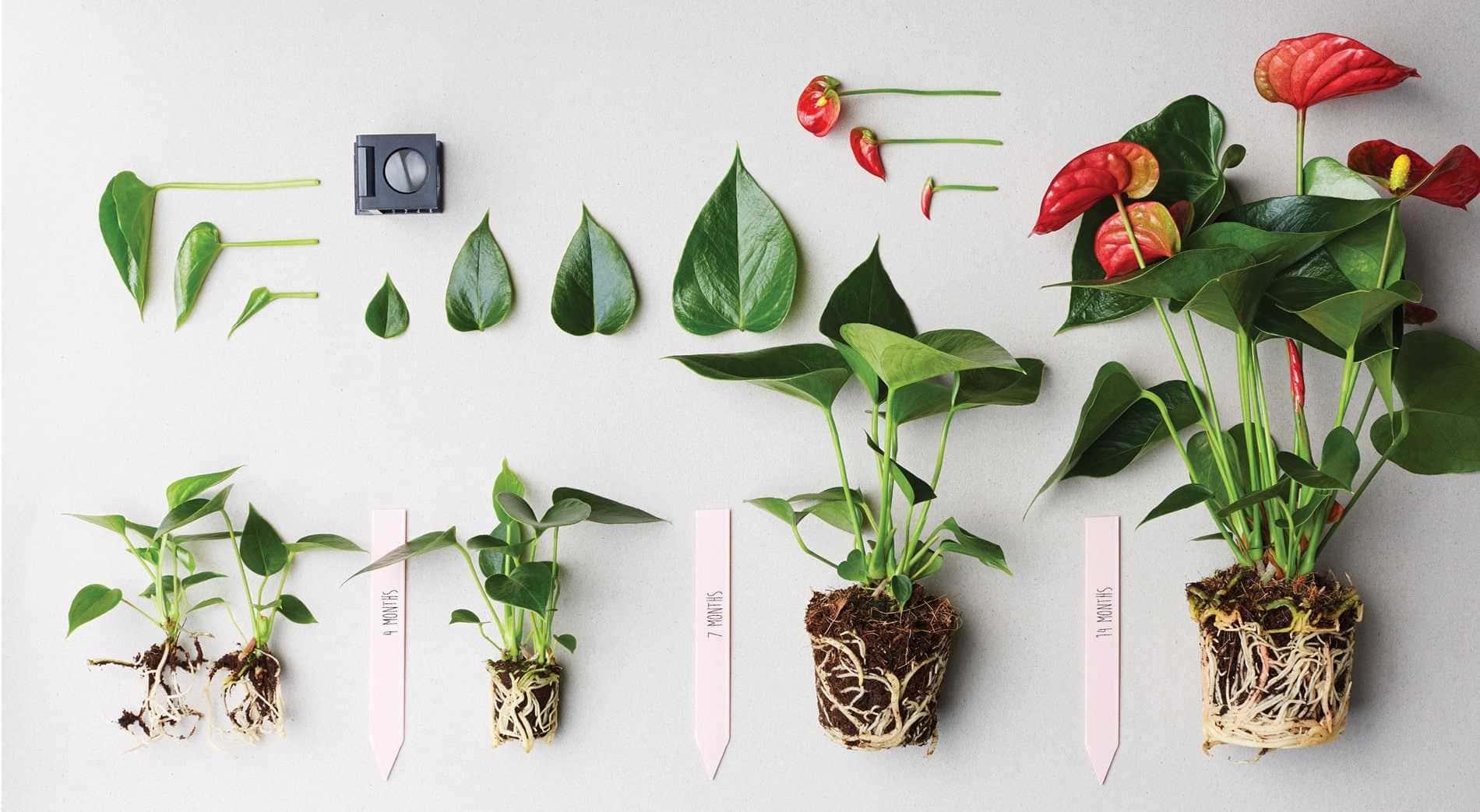 tanaman hias populer